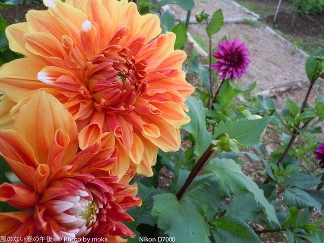 20110829-31_togakushi-adumino191.jpg