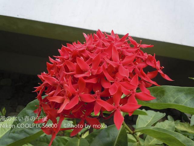 20120317-24_puket-pipi295.jpg