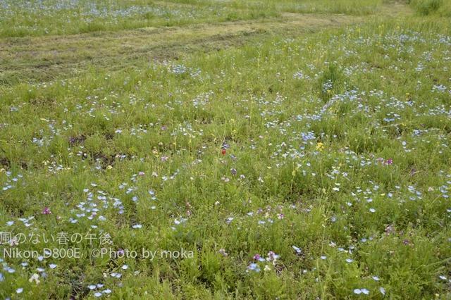 20120425_kasairinkai-park17.jpg
