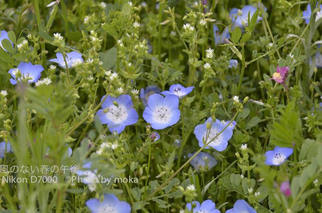 20120425_kasairinkai-park25.jpg