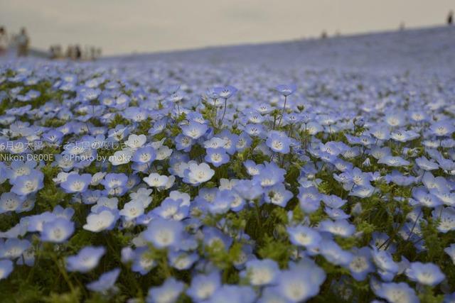 20120430_hitachinaka51.jpg