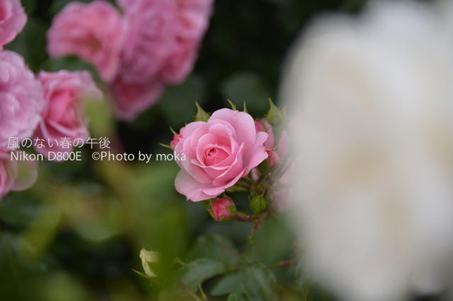 20120525_oujikamiya10.jpg