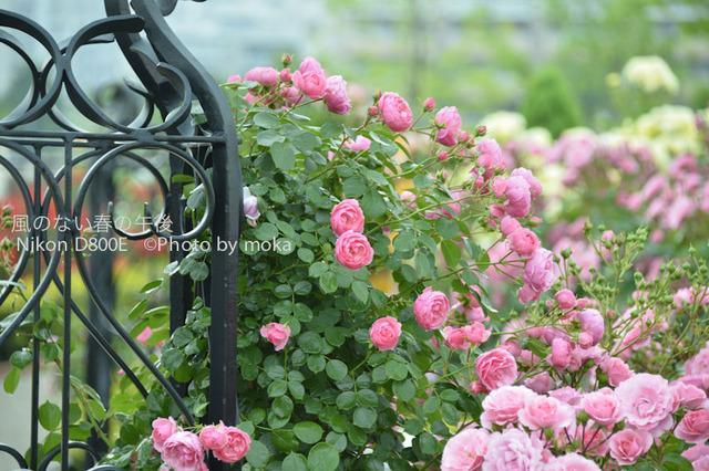 20120525_oujikamiya23.jpg