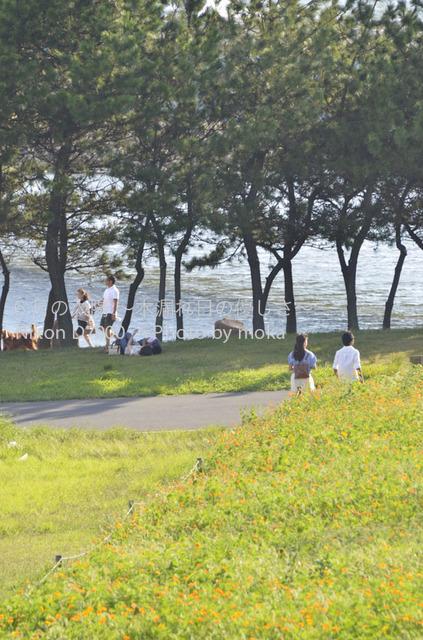 20120827_kasairinkai-park32.jpg