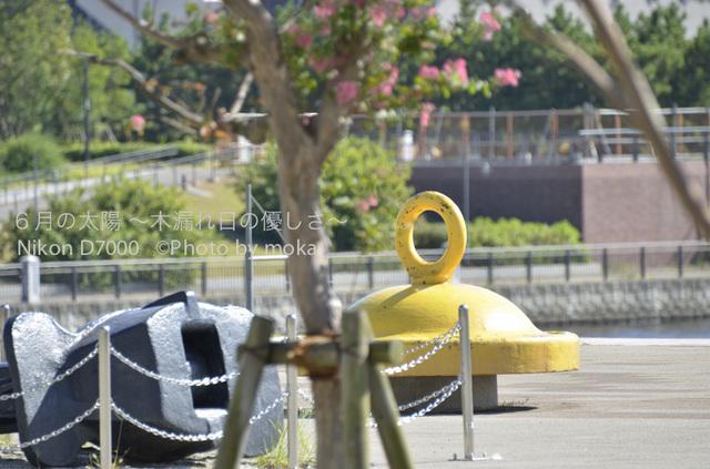 20120827_toyosu23.jpg