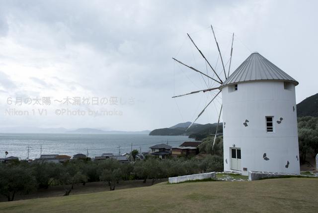 20120917-18_shodoshima30.jpg