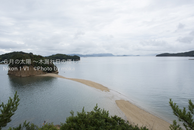 20120917-18_shodoshima71.jpg