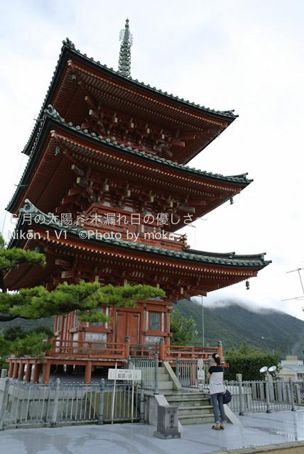 20120917-18_shodoshima84.jpg