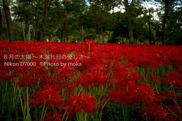 20121003_kinchakuda073.jpg