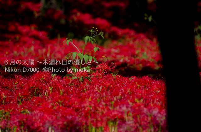 20121003_kinchakuda089.jpg