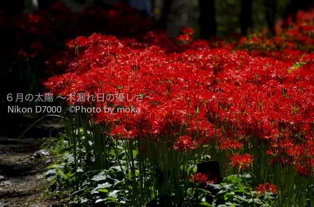 20121003_kinchakuda098.jpg