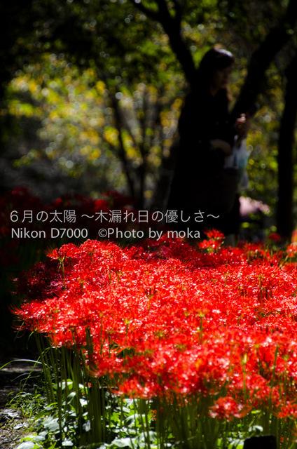20121003_kinchakuda099.jpg