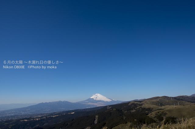 20130129_hakone02.jpg