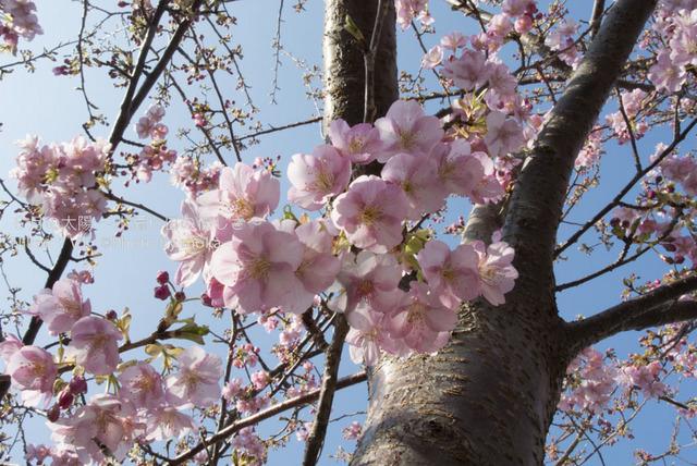 20130222-23_izu006.jpg