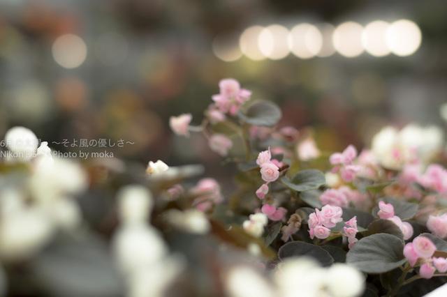 20160730_jindaiji240.jpg