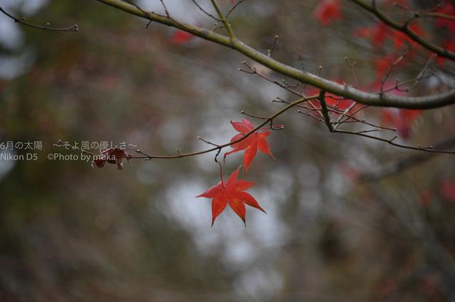 20161123_shouwakinen-park08.jpg