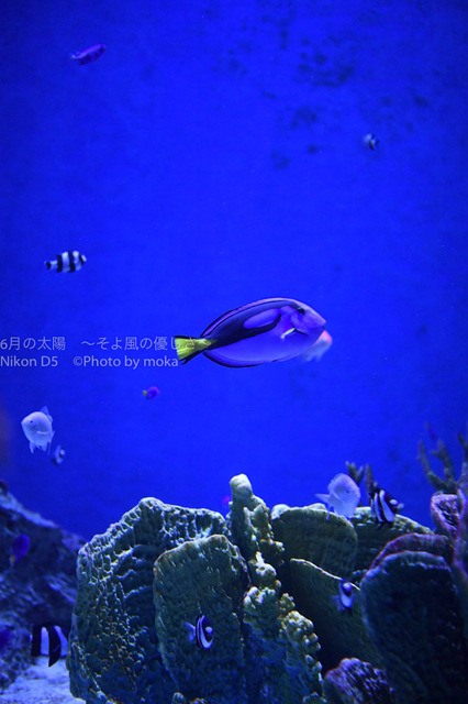 20170426_shinagawa149.jpg