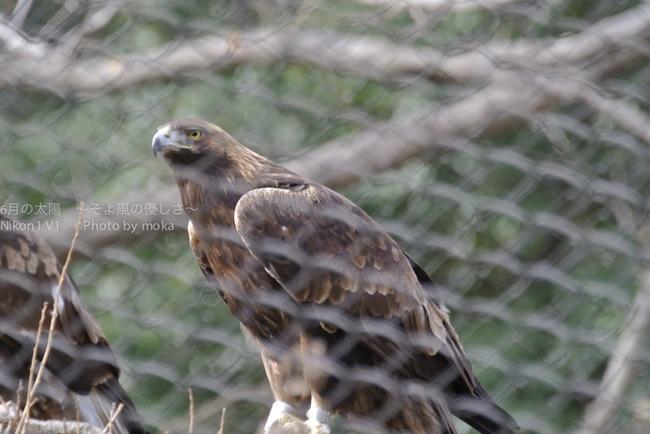 20140206_tama-zoo170.jpg